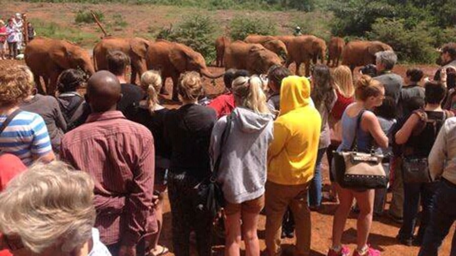 At David Sheldrick elephant orpharnage