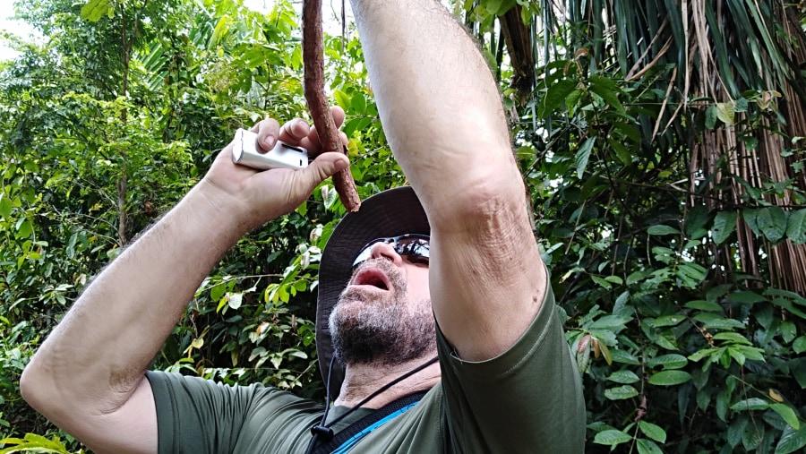 tasting the jungle liana water