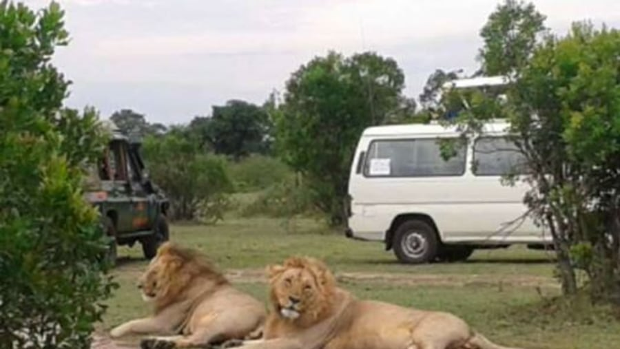 safari Game drive