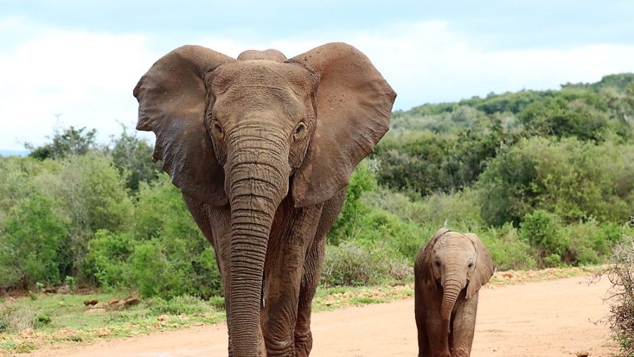 On Safari with Alan Tours in the Addo Elephant National Park