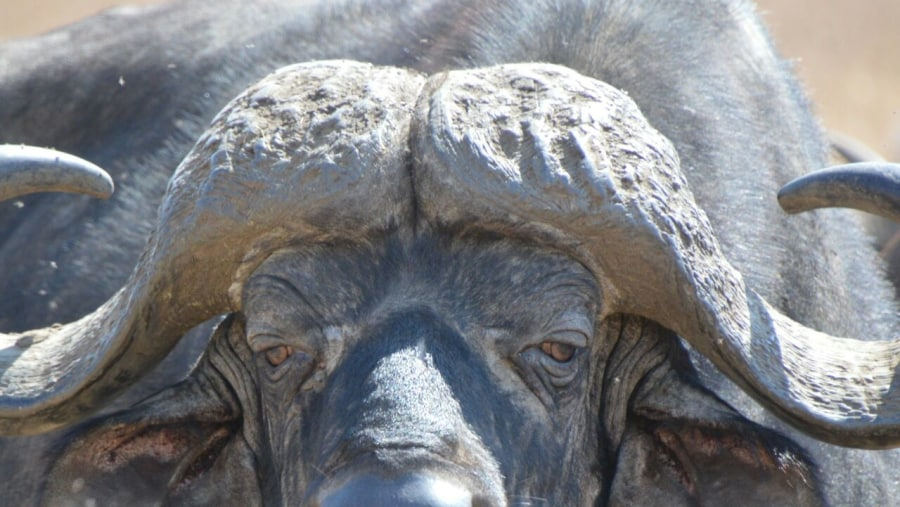 """""""A great taste of Tanzanian Game Parks''. ''Do not miss!! ''"""