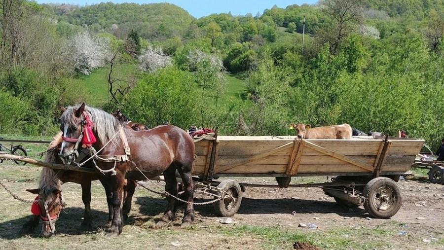 chariot horses, traditional village market