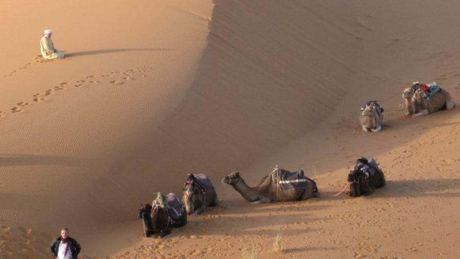Merzouga Camel-trekking