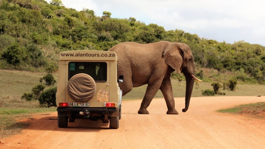 4x4 Safaris with Alan Tours, Addo Park, South Africa