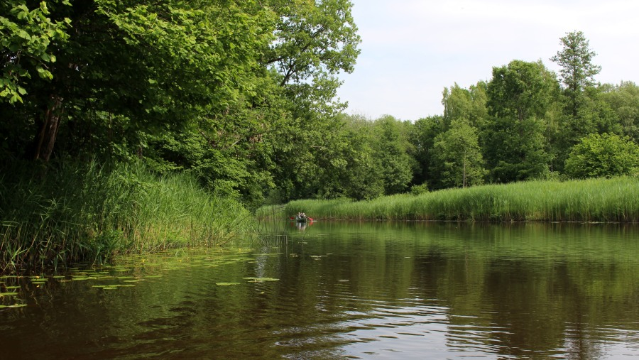 Canoeing in Soomaa National park