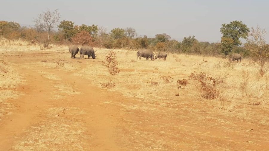 Rhino Walk Safari