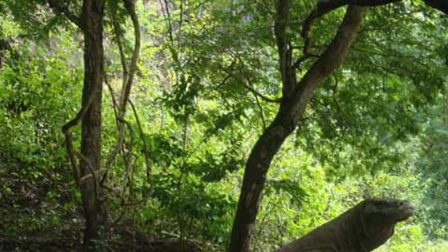 Heroni (BALI KOMODO TOURS)