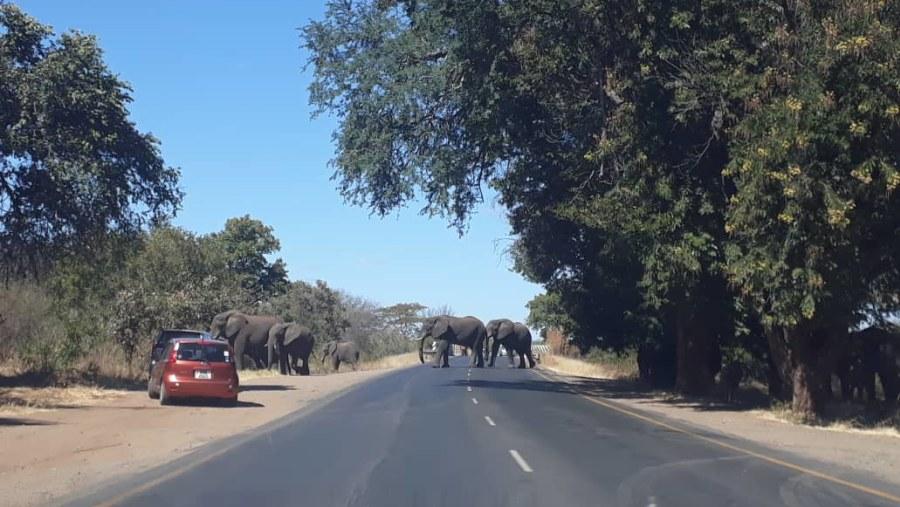 Ramjet Safaris