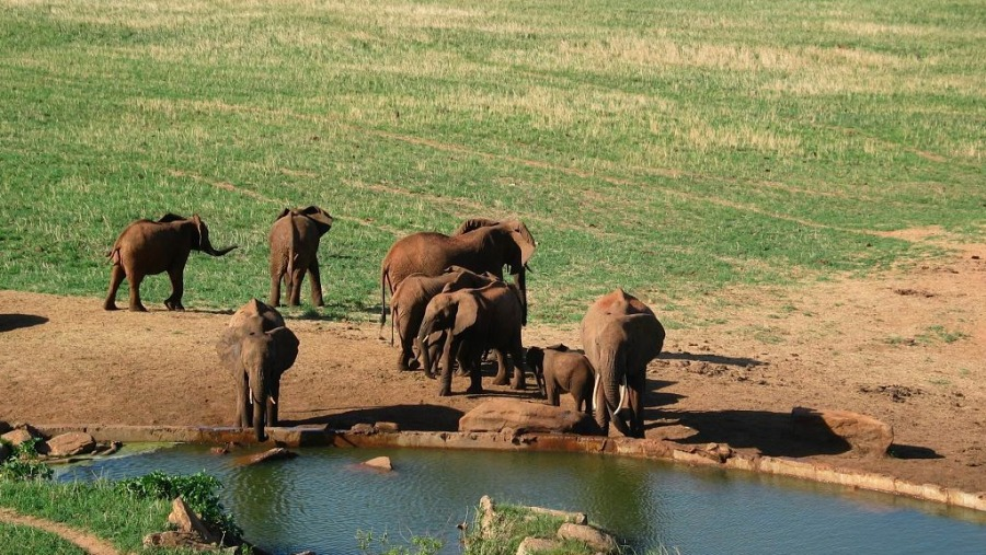 Elephants Herds At Tsavo Watering Point