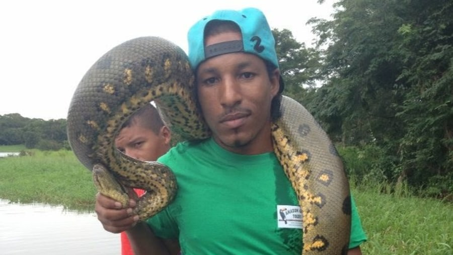 This is the anaconda the largest snake in the world