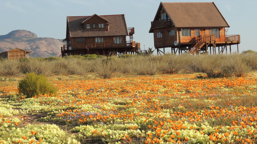 Houses on stilts watching over the Spring flower display