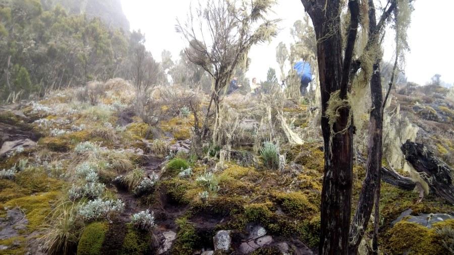Explore the nature of mount Kilimanjaro via Umbwe Route.
