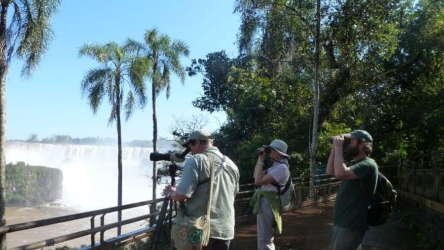 Birding with Jack and Carol - Upper Circuit - Iguazu NP