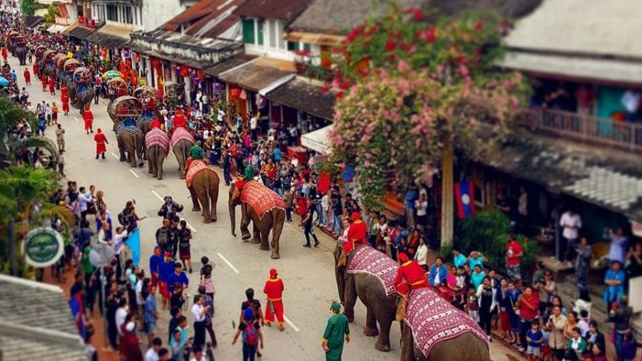 Elephants procession