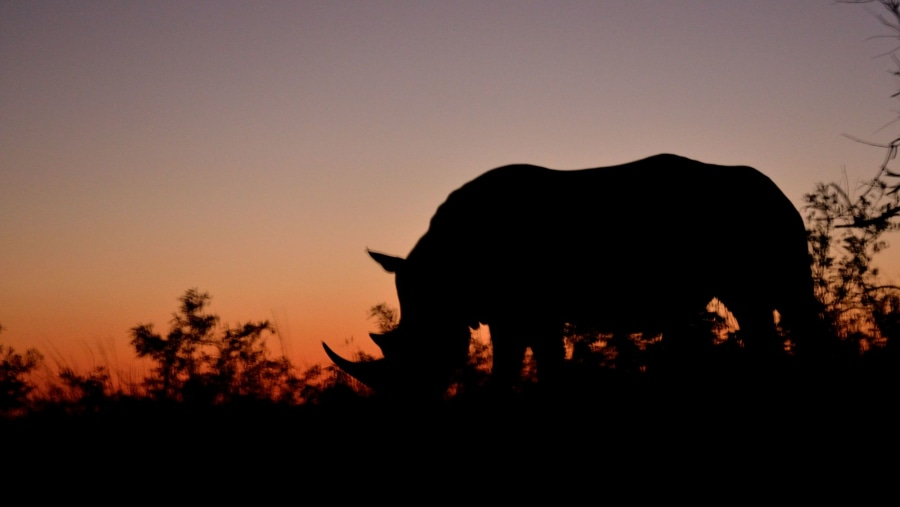 The best place to see the endangered white rhino - Captured guide Steve at sunset