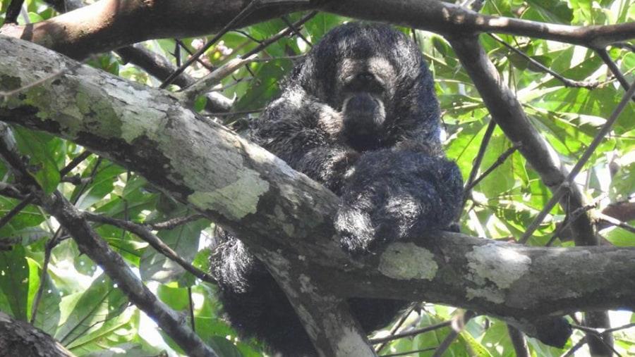 yarapa expeditions monsaki monkey