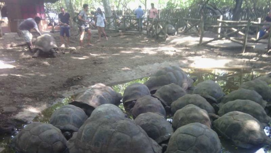 A number of Aldabra tortoises the oldest one is about 191 years old.
