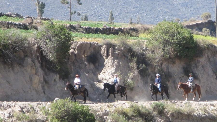 Horseback Riding Trips
