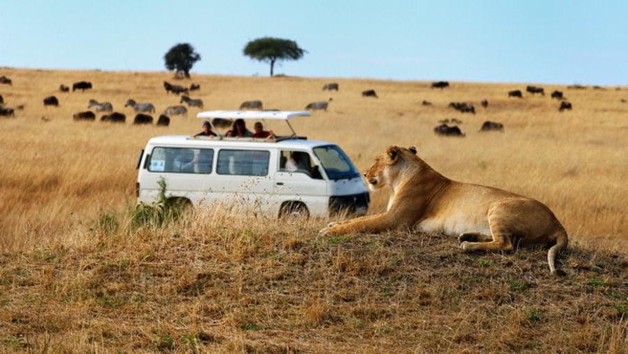Game drive in Masai Mara by Inside Africa Budget Safaris