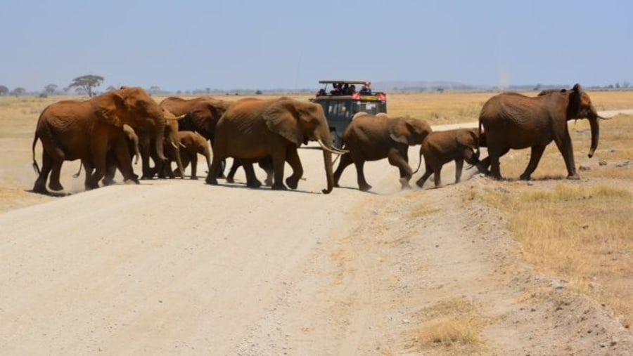 Elephants herds