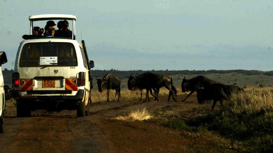 Safari van with pop up roof