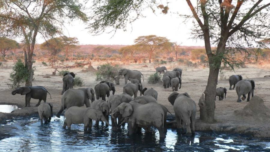 Elephants enjoy the water