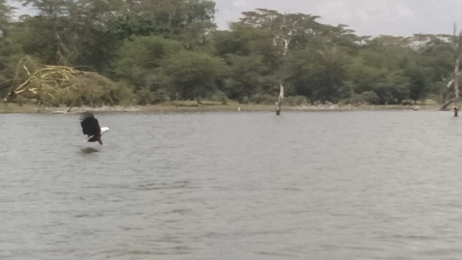 Exploring the lake Naivasha on a boat ride