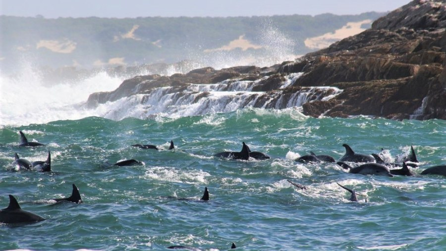 Big 7 Safaris with Alan Tours, Dolphins off St Croix island