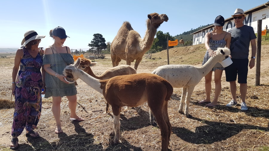 The Rein Family vs the Alapaca Loom
