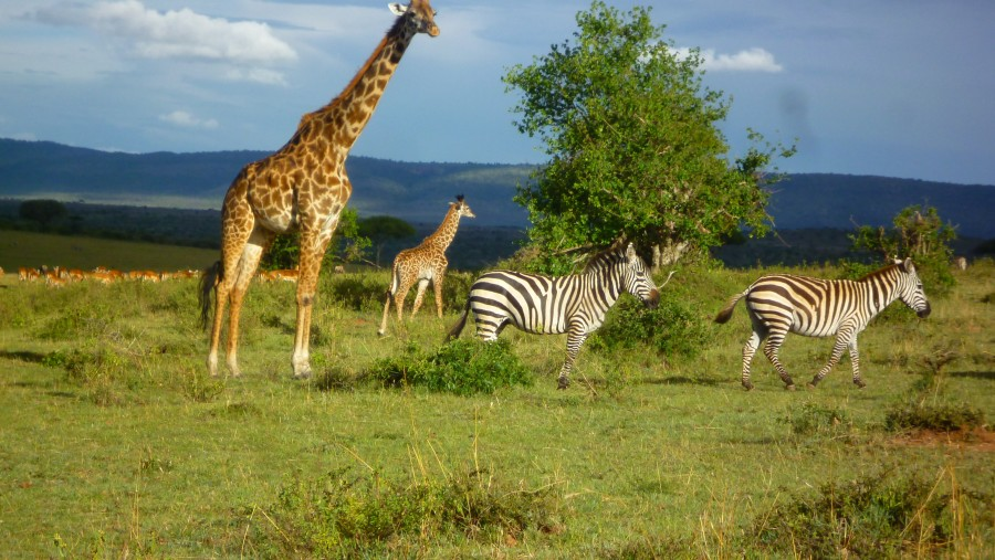 Best Guide for Masai Mara and Samburu