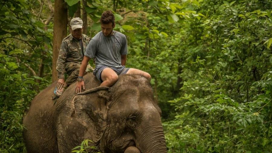 Elephant rides