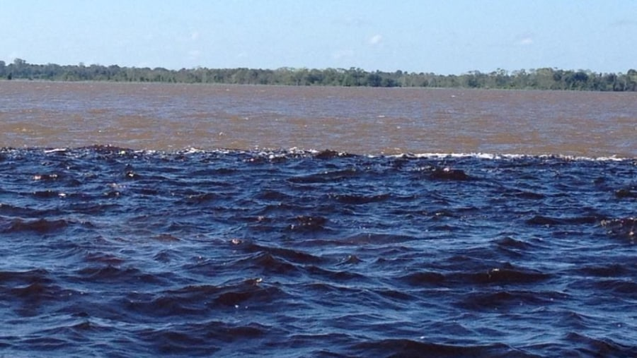 The Amazon river and negro river the confluence of the two river