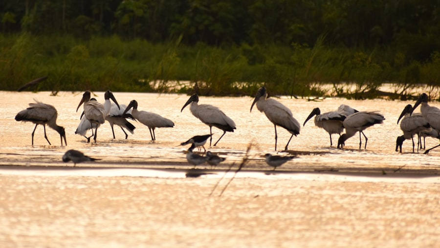amazing finding with this group of Wood Stork