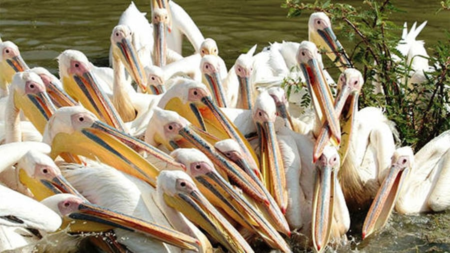 lake ziway birds