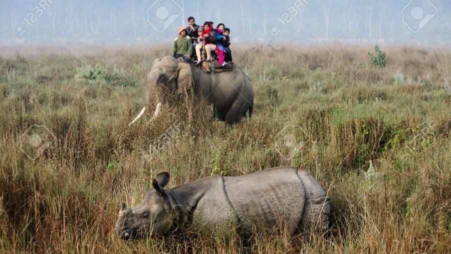 Elephant ride to watch one horned Rhinoceros