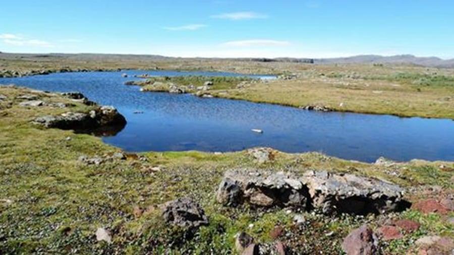 on the Afro-alpine of sanate plateau