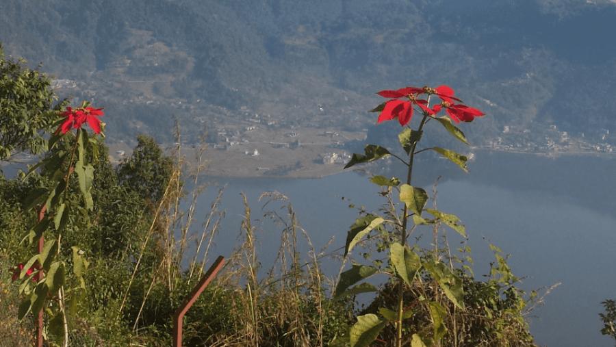 sagar maharjan