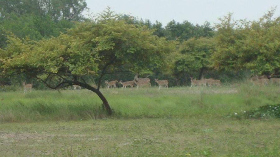 Deer at Jamtala