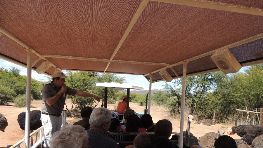 Guided Ostrich Farm Tours