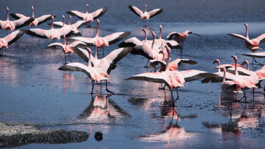 Altiplanic lagoons - Los Lipez desert