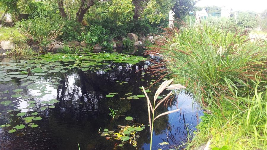 Harold Porter National Botanical Gardens