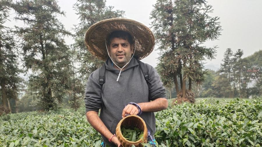 Tea Plantation Garden