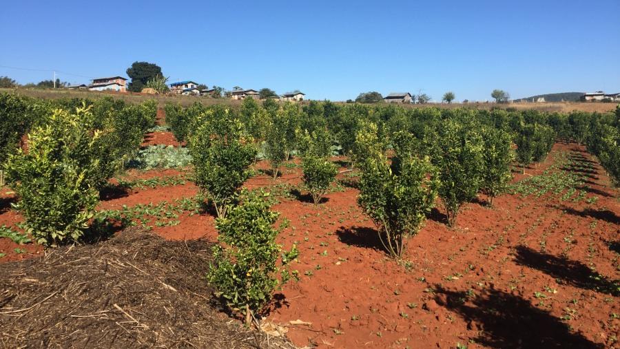 Plantation on trek