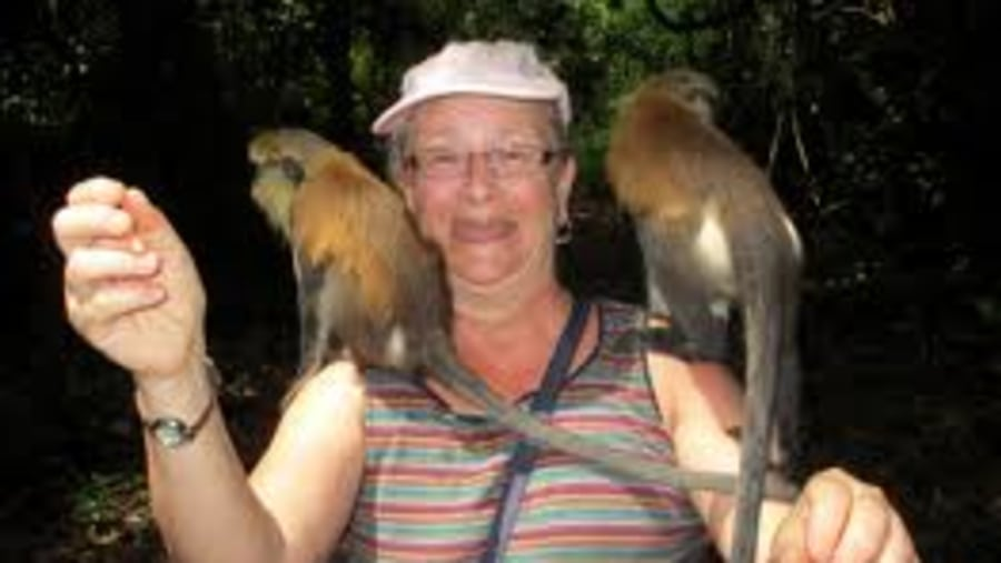friendly mona monkeys