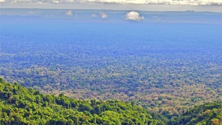 Harenna forest  is one of the second largest forest in Ethiopia by 4000km2 out of national park and in side  ,one of the richest   by having different flora ,reptiles,amphibians and wildlife