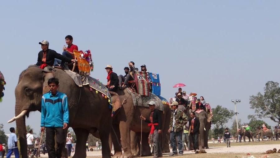 Elephants Festival