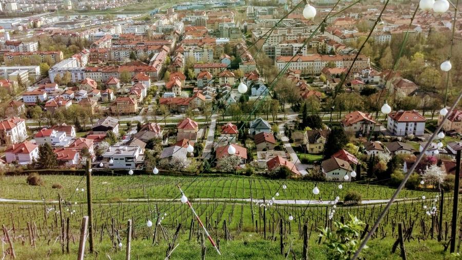 The city and its vineyards
