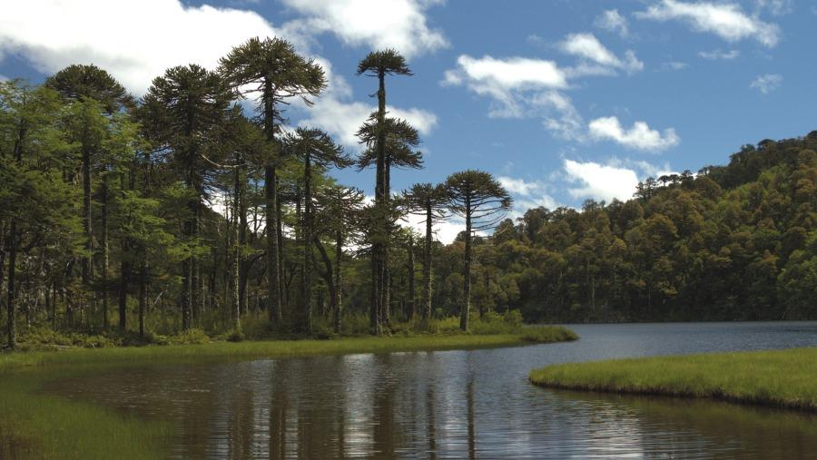 Huerquehue National Park