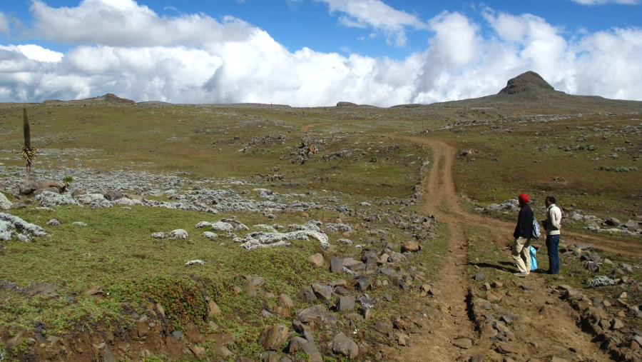 Looking For One the Rarest Canids ,Ethiopian Wolf On the Afro Alpine Sanate plateau