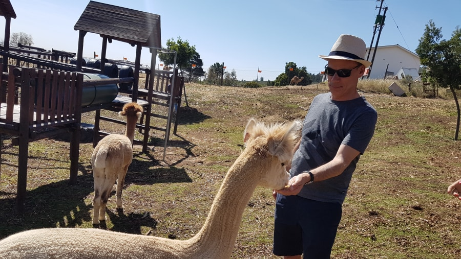 Andrew getting some Alpaca Attention